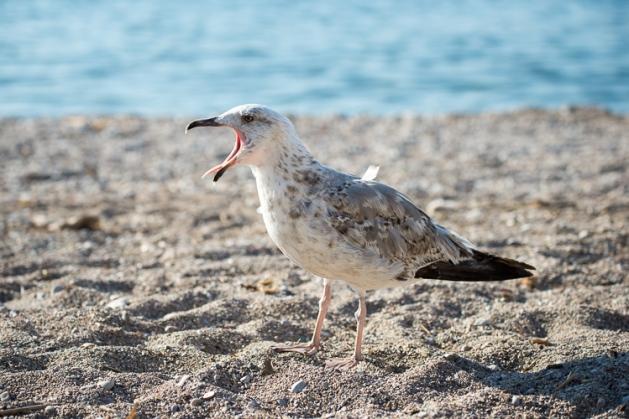 Tag 188_Möwe am Strand