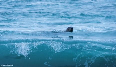 Kleiner Kerl im Meer. 20150706-20150706-DSC_2923